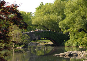 Bridge in beautiful Central Park New York.